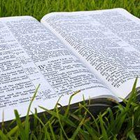 bibleingrassbox